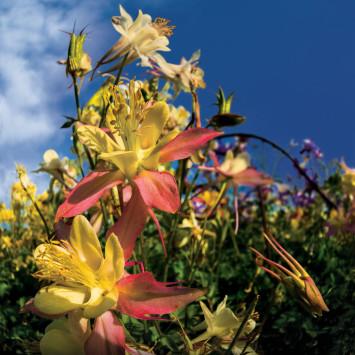 flower_blooms