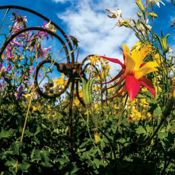 Home_grown_garden_flowers
