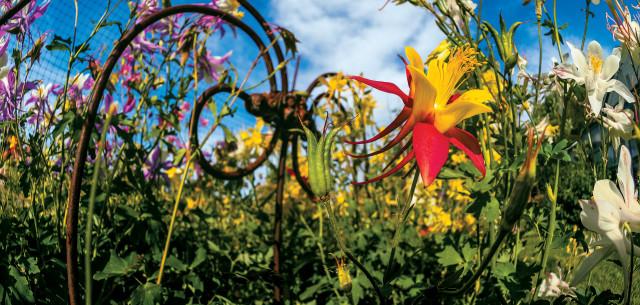 Backyard Business in Blooms