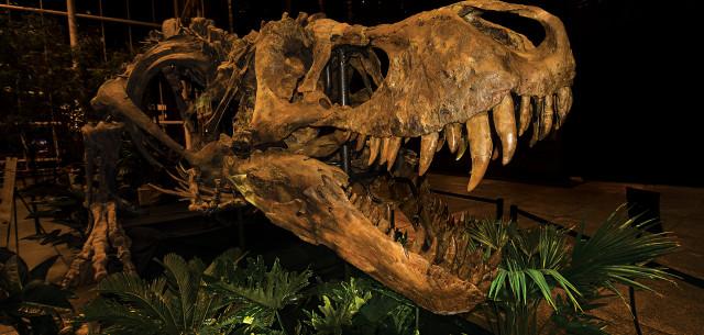 T-Bones and T-Rexes