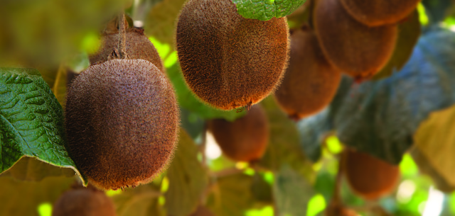 New Engine Technology Helps California's Kiwi King Irrigate