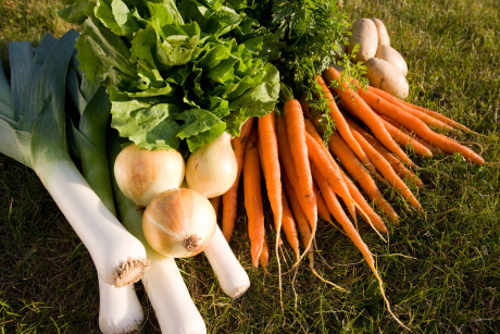 Try_growing_root_vegetables_in_your_raised_beds