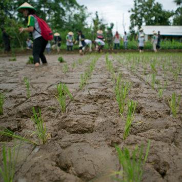 john-deere-employees-in-a-rice-field