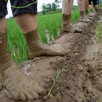 John-deere-employees-working-in-rice-field