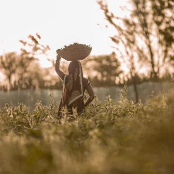 JIVA_Sita_Field_Carrying_Basket
