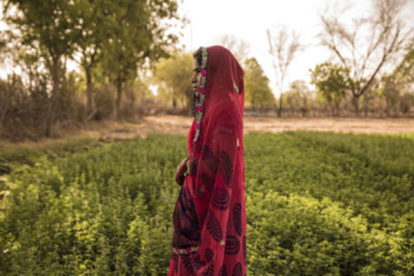 Guddi Kumawat's family owns a 7-acre farm in Morra. Through improved crop drip irrigation and vermi-composting – which uses worms to create organic fertilizer – they have increased their annual income by 45,000 rupees, or $720 per year.
