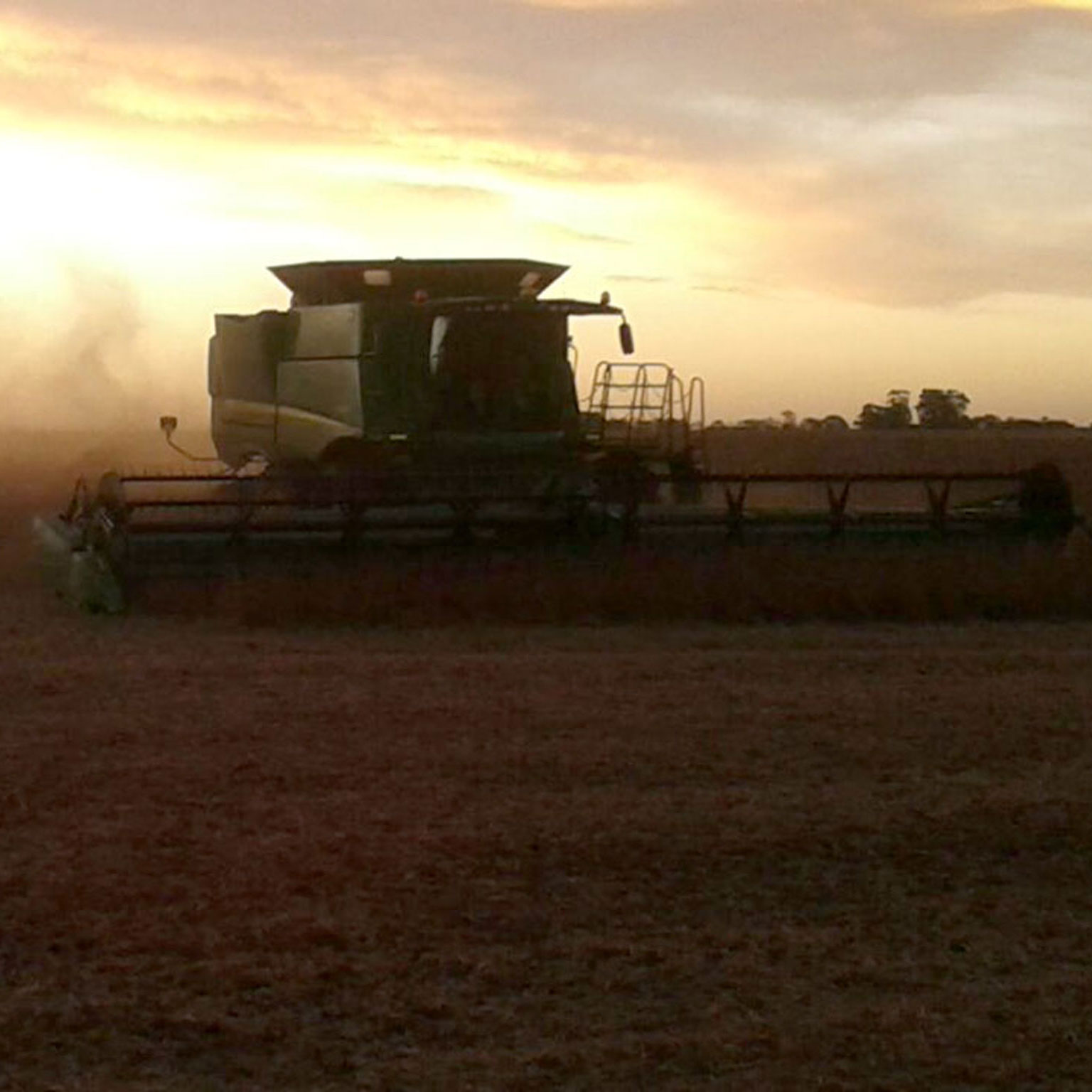 Soybean harvest as seen in Argentina.