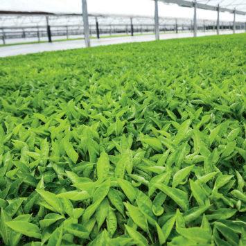 produce_farm